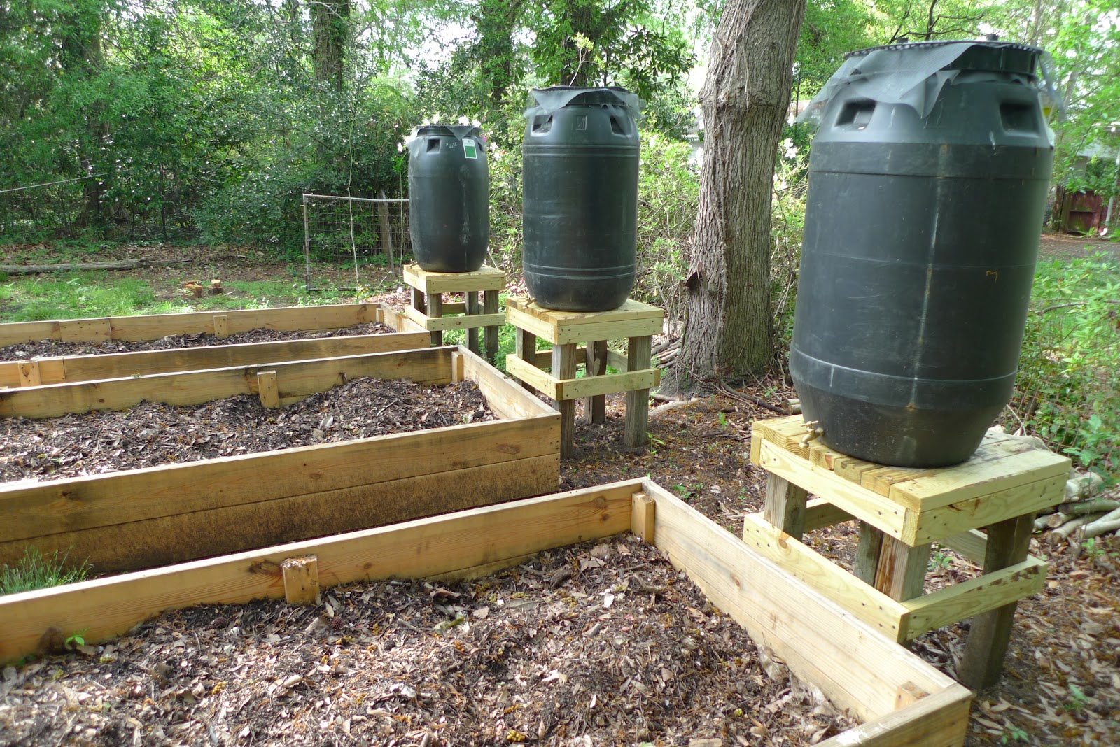 Rain barrels collection for gardening prepper days for Portable watering tanks for gardens