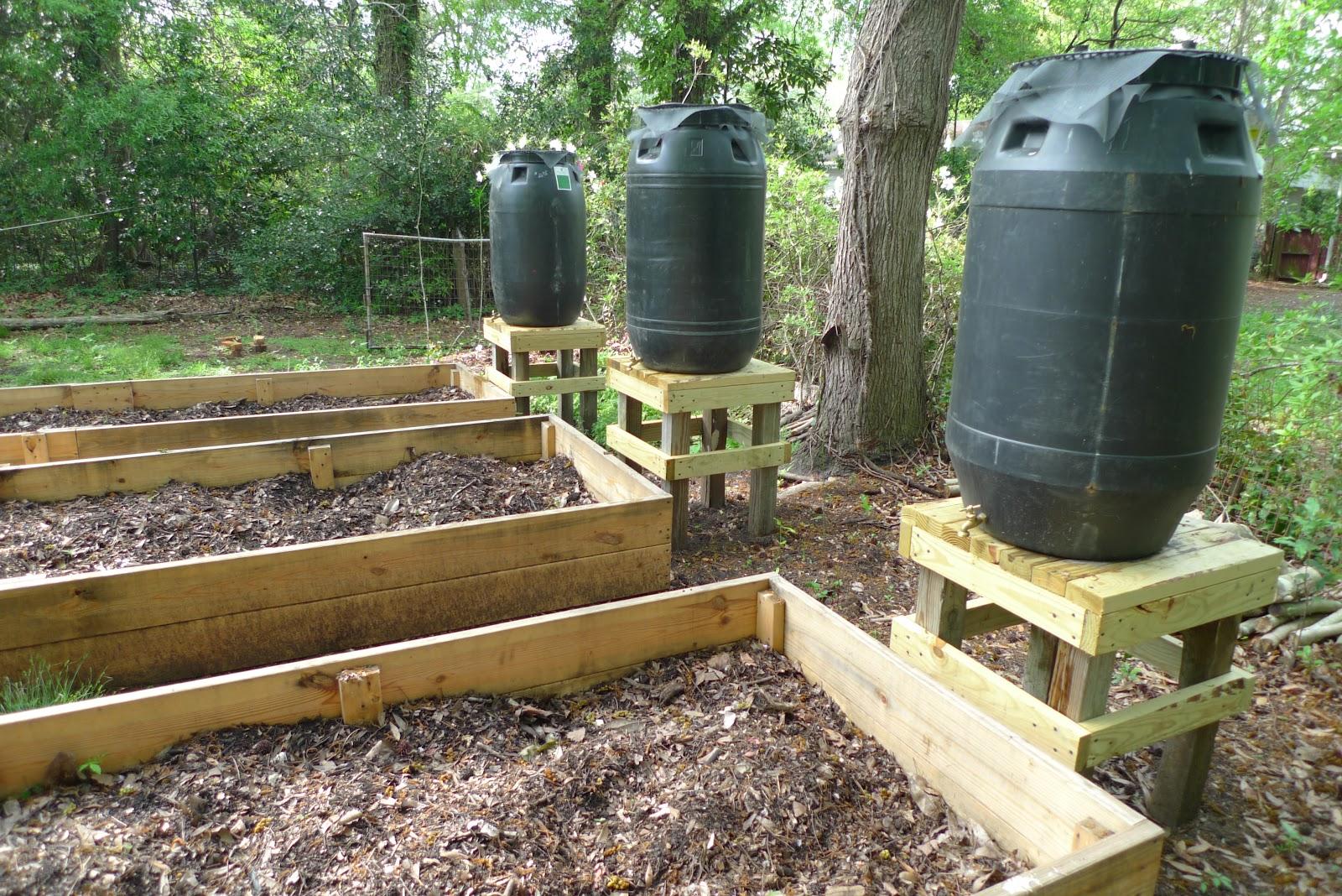 rain barrels collection for gardening prepper days. Black Bedroom Furniture Sets. Home Design Ideas